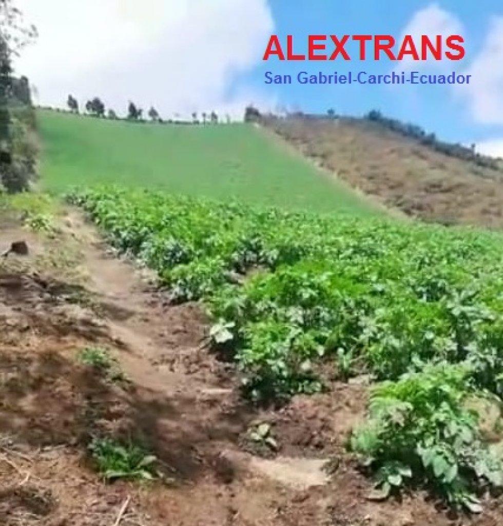Foto Cultivo por cosecha